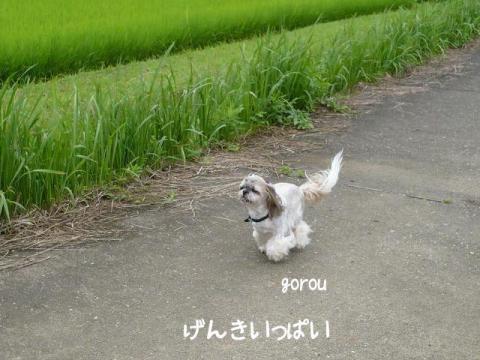 gorou1_20120709144423.jpg