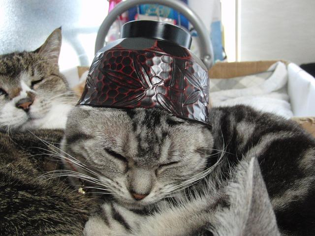 乗せ猫、モカお椀。