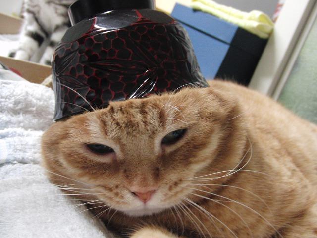 吾郎、お椀。