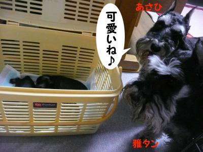 ダイアンっ子7月4日
