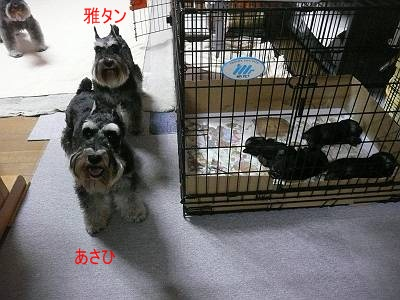 ダイアンっ子7月10日3-s