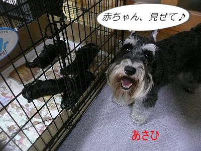 ダイアンっ子7月10日1-s