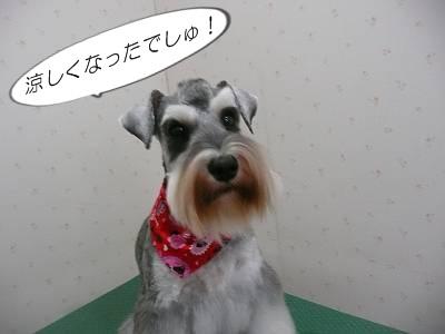 小春ちゃん7月12日1-s