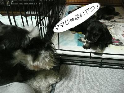 ダイアンっ子7月17日3