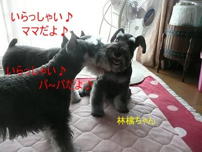 林檎ちゃん7月26日1-s