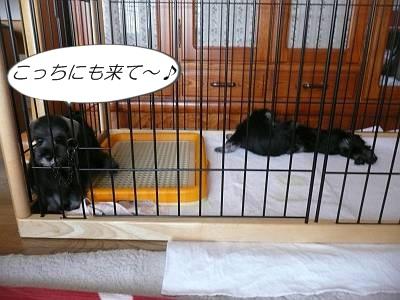 ダイアンっ子7月26日2-s