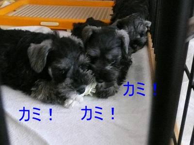 ダイアンっ子8月6日-s