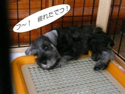 ダイアンっ子アラシ8月11日1-s