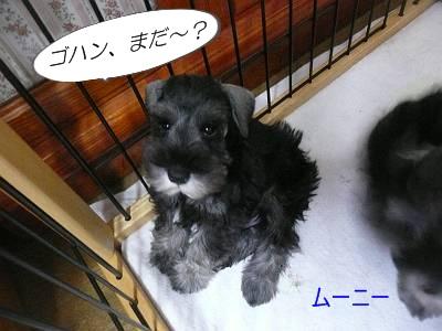 ダイアンっ子ムーニー8月16日1-s
