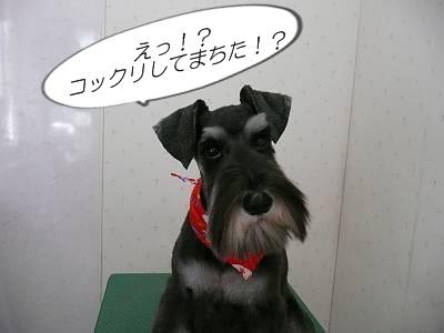 林檎ちゃん8月20日1-s