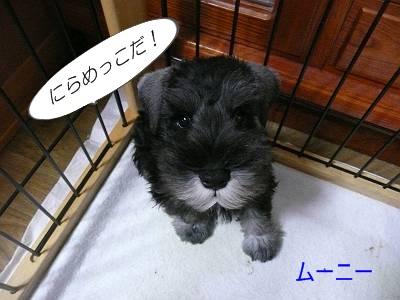 ダイアンっ子ムーニー8月21日-s
