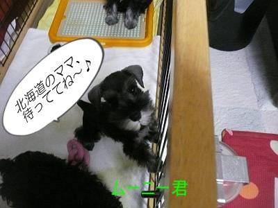 ダイアンっ子ムーニー8月25日1-s