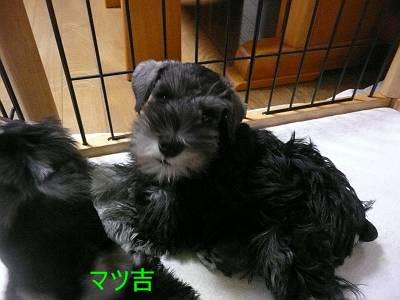 ダイアンっ子マツ吉8月30日-s