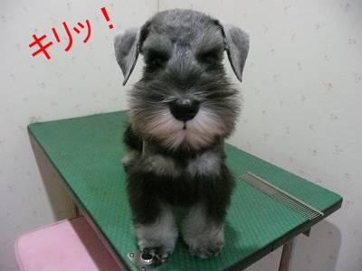 ダイアンっ子マツ吉9月1日-s