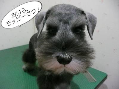 ダイアンっ子マツ吉9月1日1-s