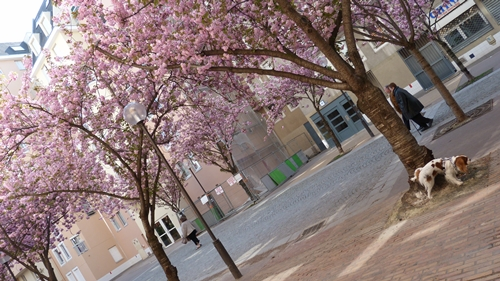 桜とギネス
