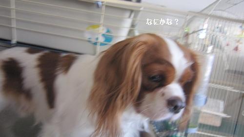 IMG_6239_20130220204046.jpg