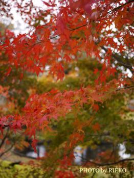 2012-11-24_2381_BLOG.jpg