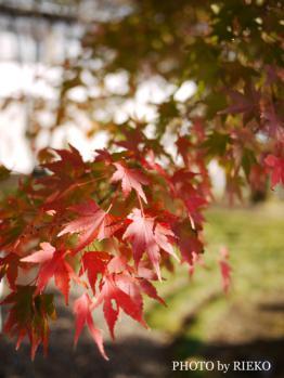 2012-11-24_2395_BLOG.jpg