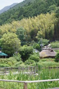 金鱗湖 1