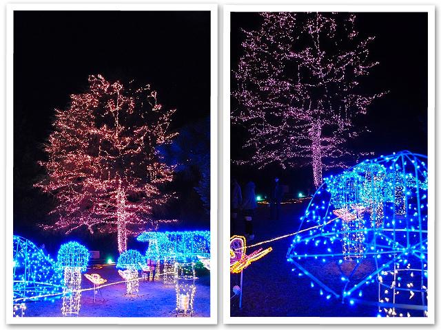 イルミ☆森林公園