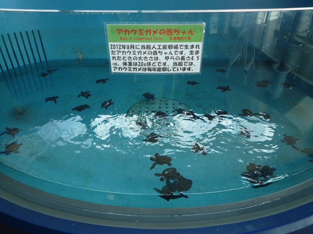 コガメがいっぱい!