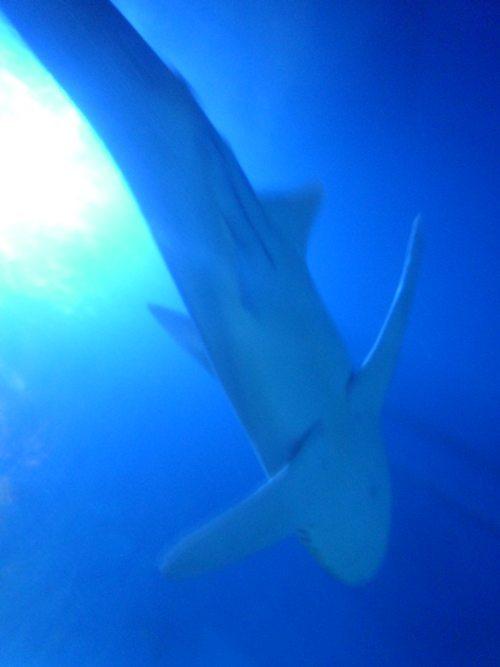 サメも泳ぐ♪