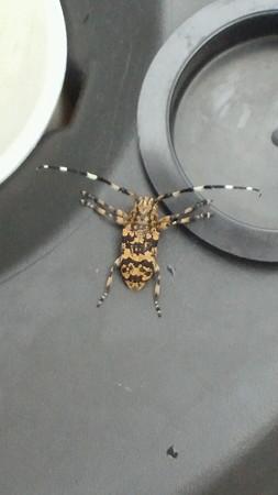 カミキリ虫??