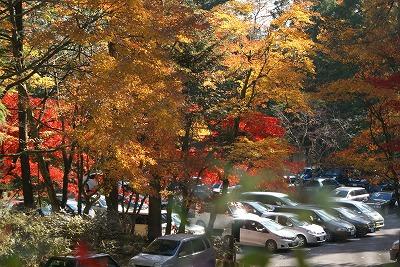 駐車場の紅葉1