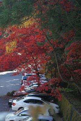 駐車場の紅葉2