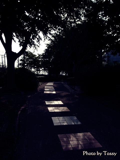 木洩れ日の公園