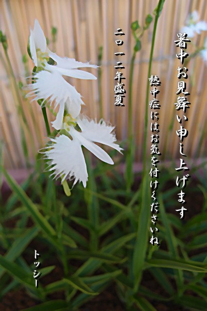 sagisou_natu.jpg