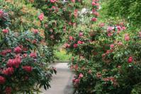 石楠花の道