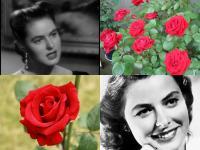 薔薇とバーグマン