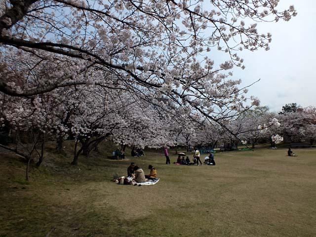 桜(82334 byte)