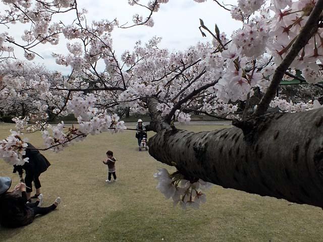 桜(72638 byte)