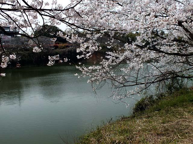 桜(88514 byte)