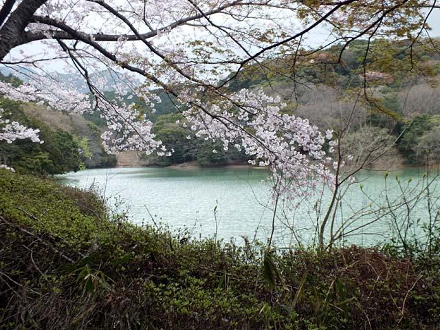桜(97788 byte)