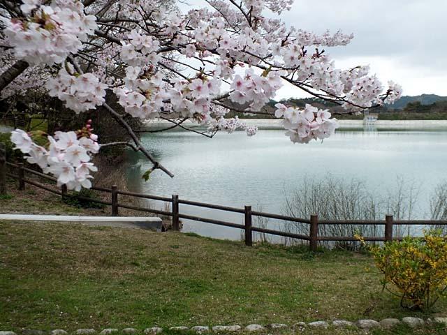 桜(74802 byte)