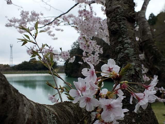 桜(53038 byte)