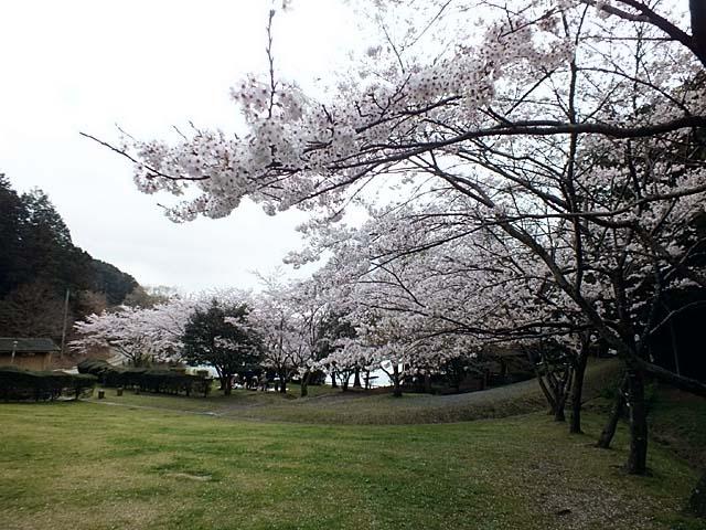桜(84850 byte)