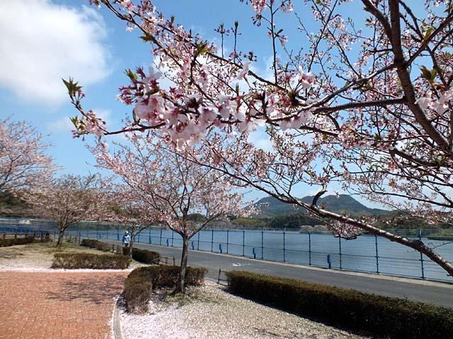 ダム湖桜景(97156 byte)