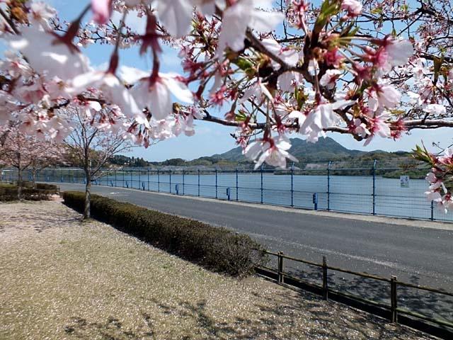 ダム湖桜景(87401 byte)