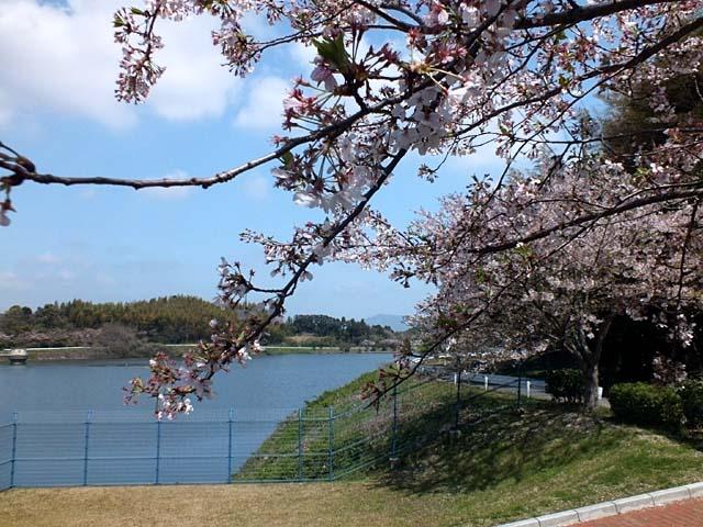 ダム湖桜景(82059 byte)