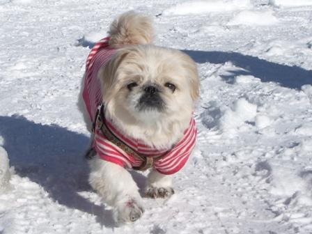 雪上散歩杏