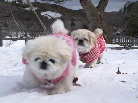 雪上ラン華と杏