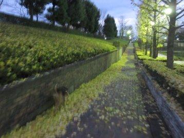 Img_4392_20121202194714.jpg