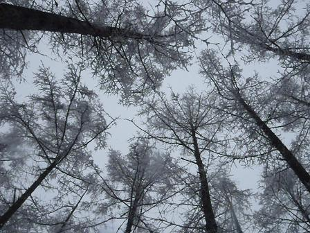 snowcoveredwood19FEB13 WOOF 117
