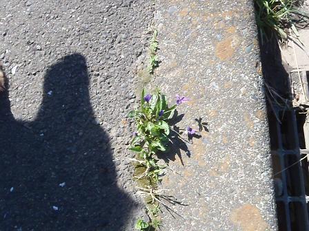 B07APR13 054flower