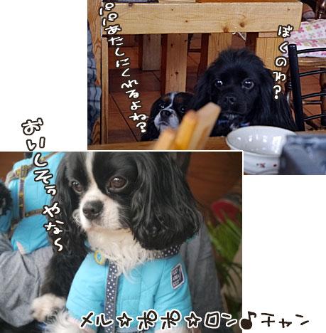 0113b_20130120215628.jpg